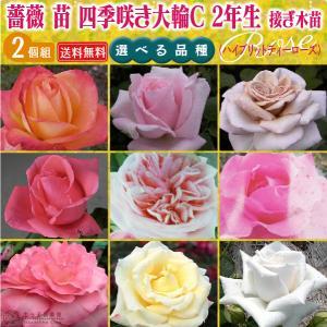 四季咲き大輪 C 選べる品種 2個セット送料無料 2年生接 ぎ木苗 ( ハイブリットティーローズ ) 送料無料|produce87