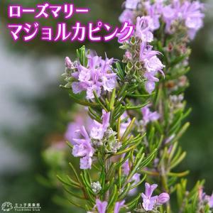 ローズマリー 『 マジョルカピンク 』 9cmポット苗 |produce87