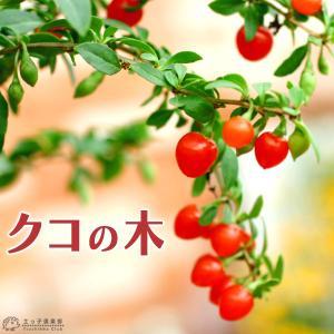 クコの木 12cmポット苗木|produce87