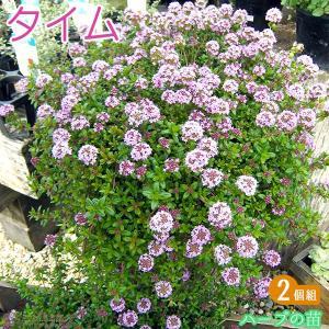 タイム 9cmポット苗 2品種セット|produce87