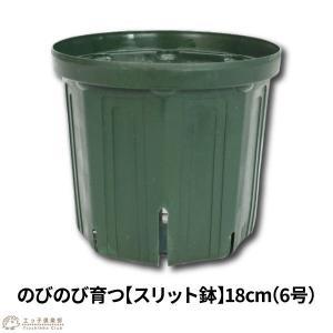 のびのび育つ 『 スリット鉢 』 18cm (6号)