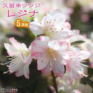 久留米ツツジ 『 レジナ 』 12cmポット苗 5本セット|produce87