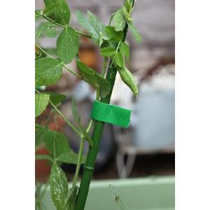 ガーデンテープ 『 園芸用 15mm幅 / 10m巻 』 3個組 在庫処分品|produce87