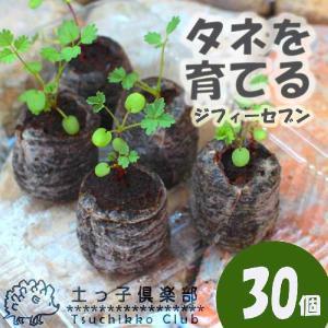 ジフィーセブン 『 種まき・育苗用 』 30個入り|produce87