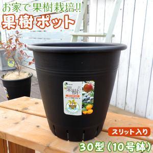 植木鉢 『果樹ポット』10号鉢(30型・黒・スリット入り)|produce87