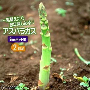 アスパラガス苗 9cmポット苗 2個組|produce87