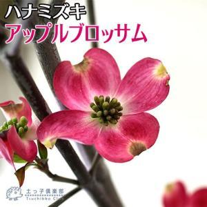 ハナミズキ 『 アップルブロッサム 』 13.5cmポット 苗木|produce87