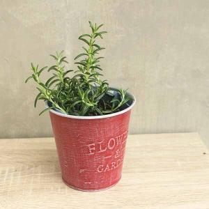 ハーブ好きのための簡単栽培ポット【スターターキット】 - ハーブ・園芸好きへ。すぐにはじめられる鉢と土と種の園芸セット-creapot|product-factory-jp