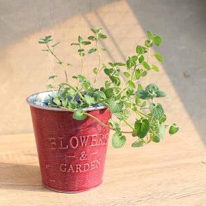 ハーブ好きのための簡単栽培ポット【専用培土セット】 - ハーブ・園芸好きへ。すぐにはじめられる鉢と土の園芸セット-creapot|product-factory-jp