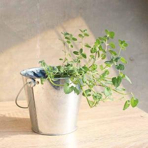 ハーブ好きのための簡単栽培ポット【鉢のみ】 - ハーブ・園芸好きへ。ハーブが手軽に育てられる簡単栽培ポット-creapot product-factory-jp