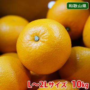【送料無料】和歌山県産 八朔(はっさく)秀品・Lサイズ 10kg|promart-jp