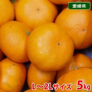 愛媛県産 甘平(かんぺい) 3kg(10〜12玉入り)|promart-jp