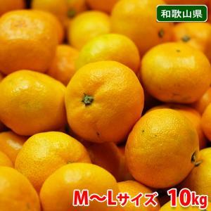送料無料 和歌山県産 有田みかん 秀品 L〜Mサイズ 10kg|promart-jp