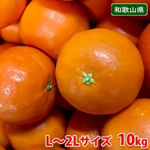 【送料無料】和歌山県産 セミノール Lサイズ 10kg|promart-jp