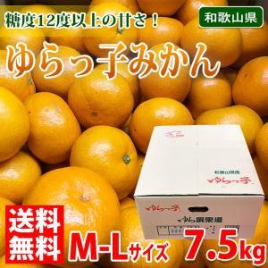 送料無料 和歌山県産 ゆらっ子 みかん 秀品 M〜Lサイズ 7.5kg(箱)|promart-jp
