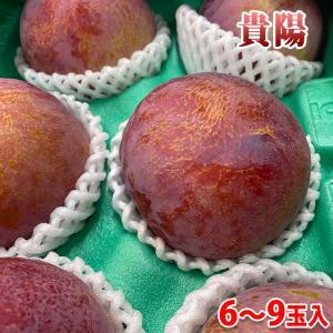 長野県産プラム 貴陽 9玉入り(約1.5kg)|promart-jp