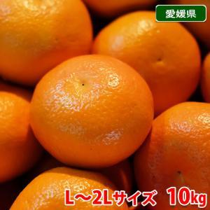 【送料無料】愛媛県産 宮内いよかん 秀 L〜2Lサイズ 10kg|promart-jp