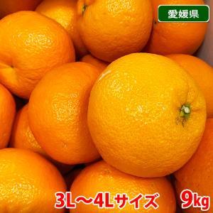 【送料無料】愛媛県産 宮内いよかん 秀 3〜4Lサイズ 9kg|promart-jp