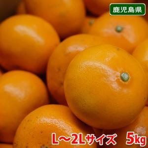 鹿児島県産 せとか 秀品 2Lサイズ 5kg|promart-jp