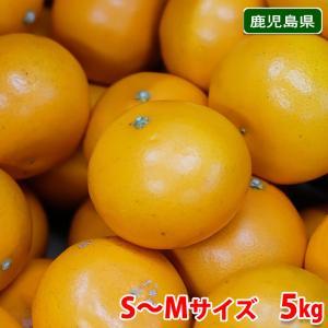 鹿児島県産 せとか 秀品 Lサイズ 5kg|promart-jp
