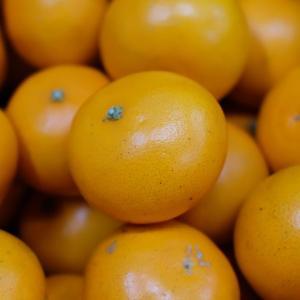 鹿児島県産 せとか 秀品 Lサイズ 5kg|promart-jp|03