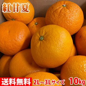 【送料無料】鹿児島県産 紅甘夏 秀品 2L〜3Lサイズ 10kg|promart-jp