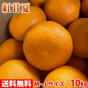 【送料無料】鹿児島県産 紅甘夏 秀品 Lサイズ 10kg|promart-jp
