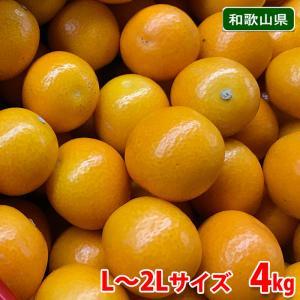 和歌山県産 金柑(きんかん) L〜2Lサイズ 4kg|promart-jp