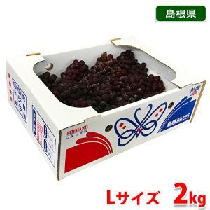 【送料無料】島根県産ぶどう デラウェア 秀品・Lサイズ 2kg(10〜14房入り) promart-jp