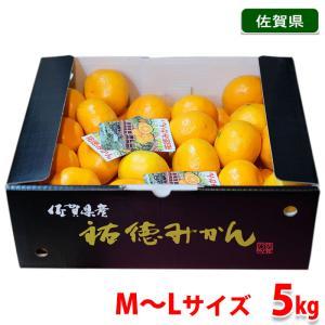 佐賀県産 祐徳みかん 秀品・Mサイズ 5kg|promart-jp