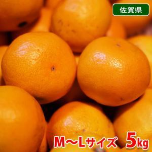 佐賀県産 みかん プレミアム 秀品・M〜Lサイズ 5kg|promart-jp