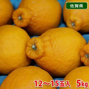 佐賀県産 デコポン 18玉入り 5kg|promart-jp
