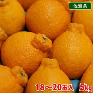 佐賀県産 デコポン 24玉入り 5kg(箱)|promart-jp