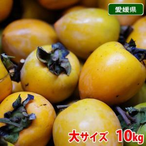 送料無料 愛媛県産 あたご柿 大サイズ 10kg箱|promart-jp
