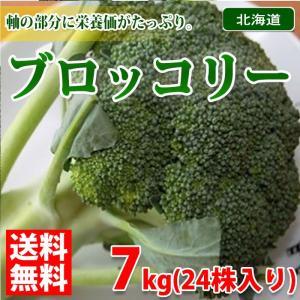 【送料無料】北海道産 ブロッコリー 秀品・24株入り 7kg箱