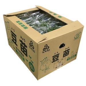 大阪府産 豆苗(とうみょう) 約300gパック×10個入り/箱|promart-jp|07