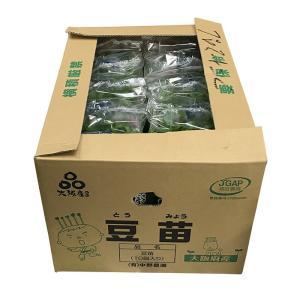 大阪府産 豆苗(とうみょう) 約300gパック×10個入り/箱|promart-jp|08