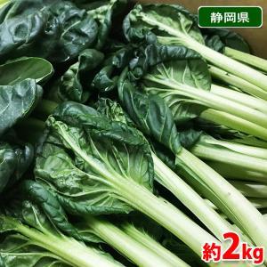 静岡県産 ターサイ(ターツァイ/タアサイ) 約2kg箱(12〜8株入り)