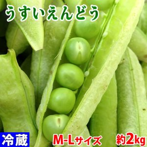和歌山県産 うすいえんどう 秀・Lサイズ 約2kg