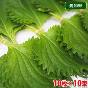 愛知県産 大葉 10枚×10束/1パック