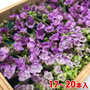 花穂紫蘇(はなほじそ) 約17〜20本入り 1箱...