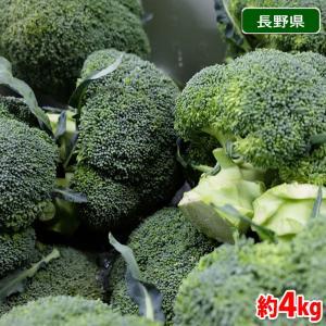 長野県産 ブロッコリー 15株入(約4kg)