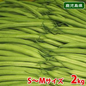 鹿児島県産 いんげん Sサイズ 約2kg|promart-jp