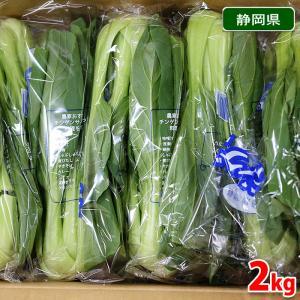 【送料無料】静岡県産 青梗菜(チンゲンサイ) Lサイズ 約2kg 1箱(16〜20株入)|promart-jp