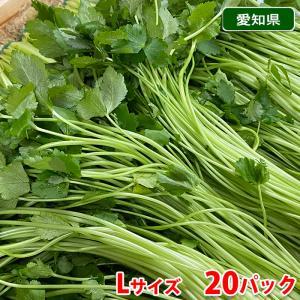 愛知県産 みつば Lサイズ 20袋入り(1箱)|promart-jp