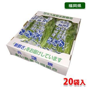 福岡県産 みつば  20袋入り(1箱)|promart-jp