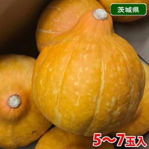 【送料無料】茨城県産 生食用かぼちゃ コリンキー 5〜7玉入り(1箱) promart-jp
