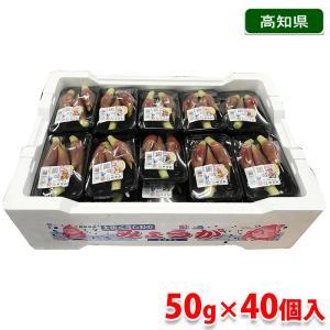 高知県産 みょうが 50gパック×40個入り(箱)