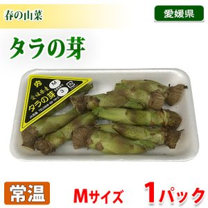 愛媛県産 タラの芽 Mサイズ 1パック|promart-jp