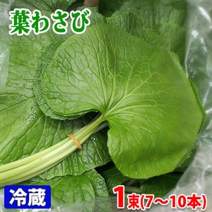 徳島県 葉わさび 6〜8本(1束)